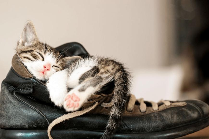7 abitudini di sonno del tuo Gatto