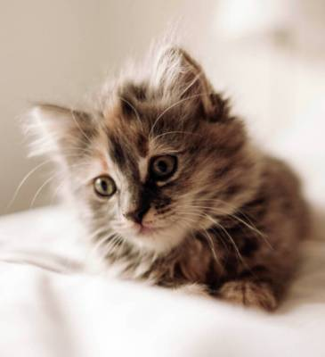 10 modi per capire se il tuo gatto è felice