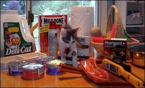 cat with supplies