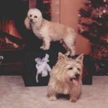 buffy and clancy