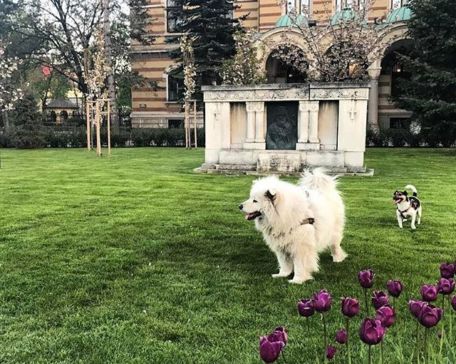 Spring colors. Home for a week. #Bulgaria #Sofia #vscocam #dogs #parklife #tullips #Spring