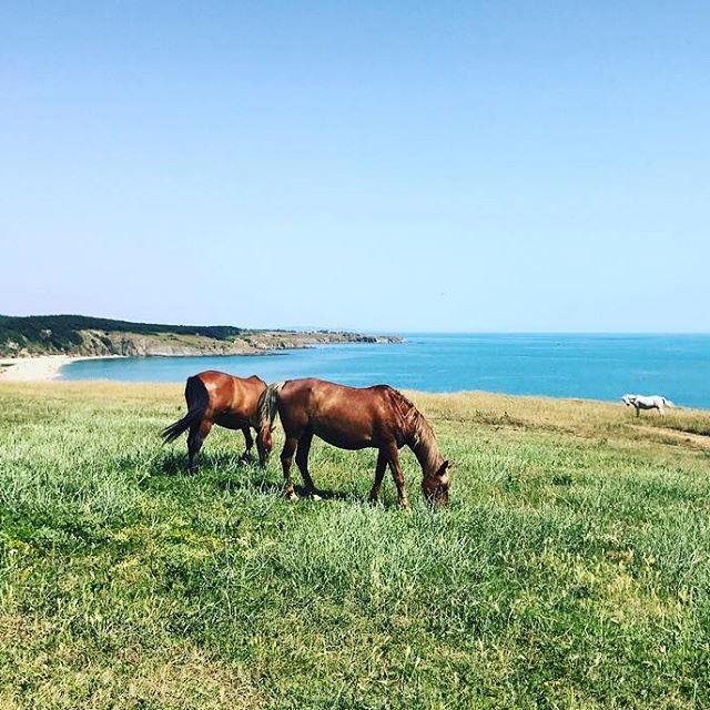 Home. #Bulgaria #Sinemorets summer #horses #beach
