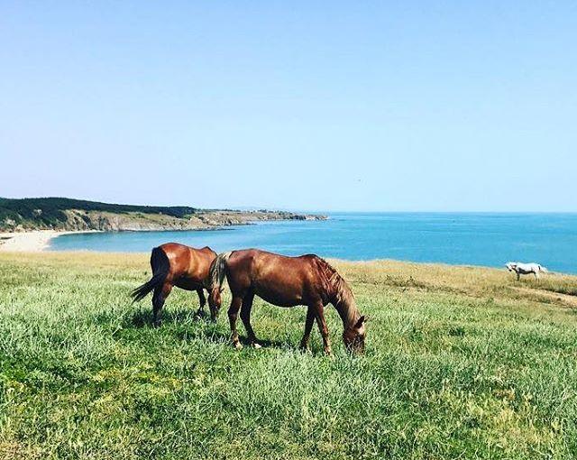 Home. #Bulgaria #Sinemorets summer #horses #beach