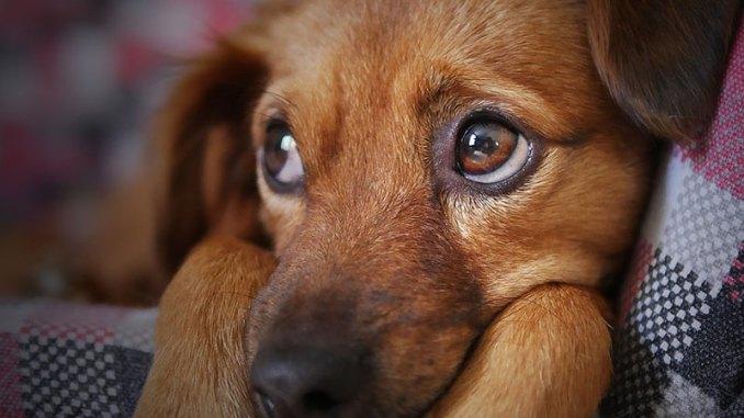 puppy-sad