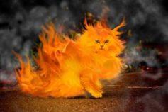 Plamena mačka