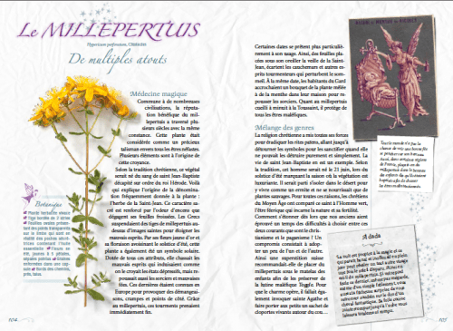 plantesfeeriques_millepertuis