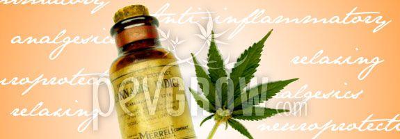 L´huile de cannabis a de nombreuses propriétés pour la santé.