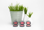 Be Green with Stowaway Cosmetics