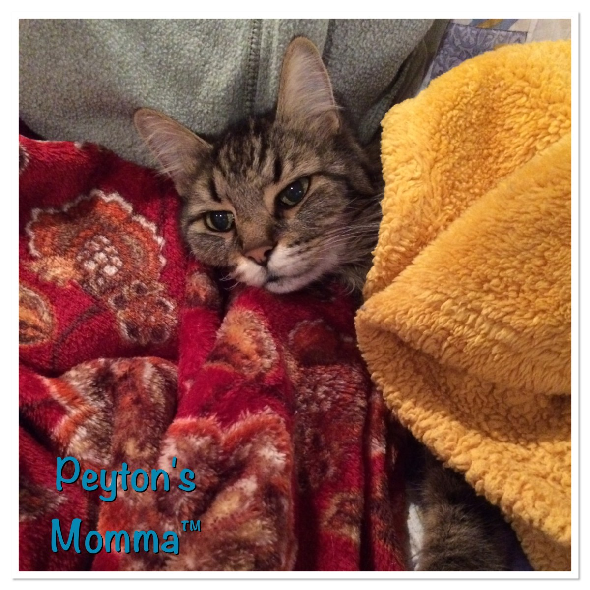 Sebastian Cuddling with the Blankets