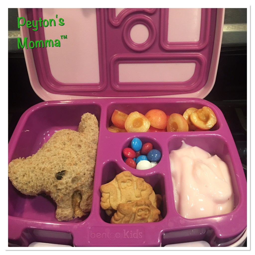 Scared Kitty Bento Box
