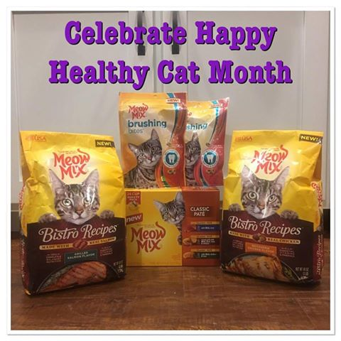 September is Happy Healthy Cat Month