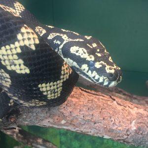 Reptile Gardens: Wild Animal Park