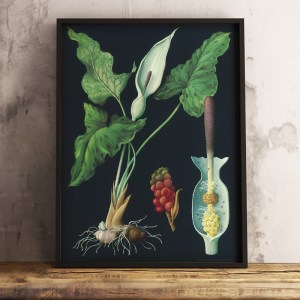 Framed Arum Lily Large