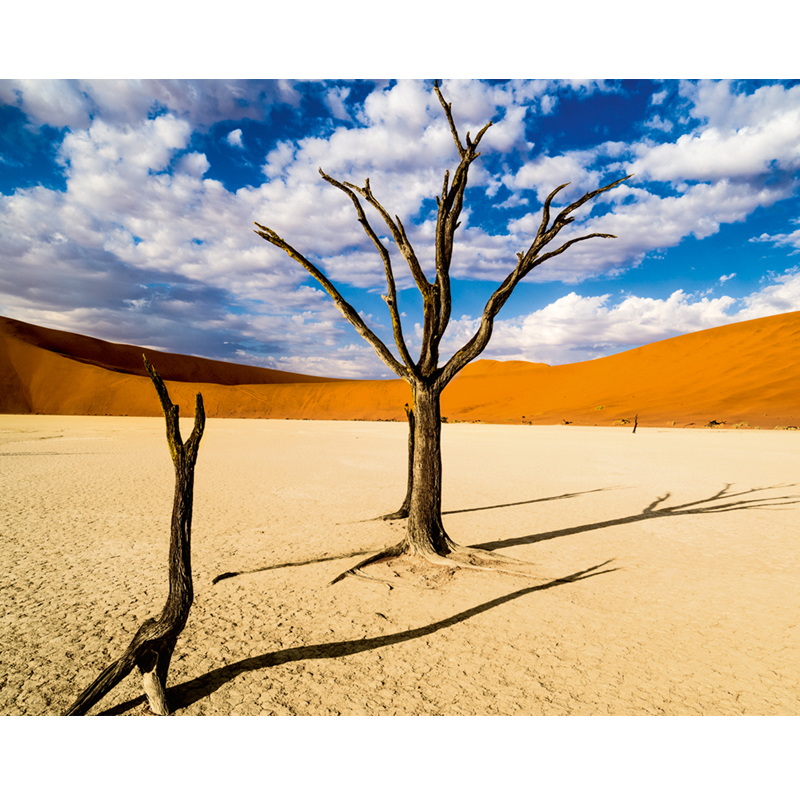 The Namib Desert 1