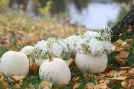 white-pumpkin-power-l-hjj5di