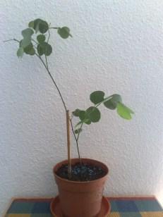 orchideenbaum_1_041012