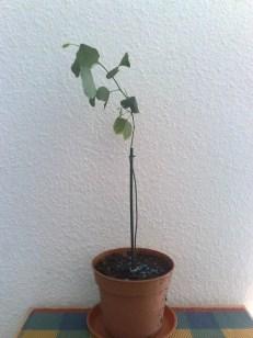 orchideenbaum_2_041012
