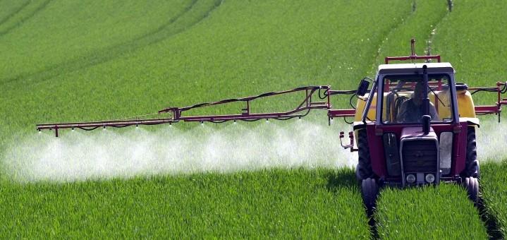 Behandlung von Weizen mit Pflanzenschutzmittel