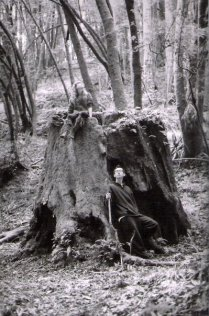 Santa Cruz Woods. 2010. 35 mm