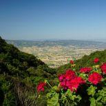 Assisi 2021_07_09, PTsch (608) - klein