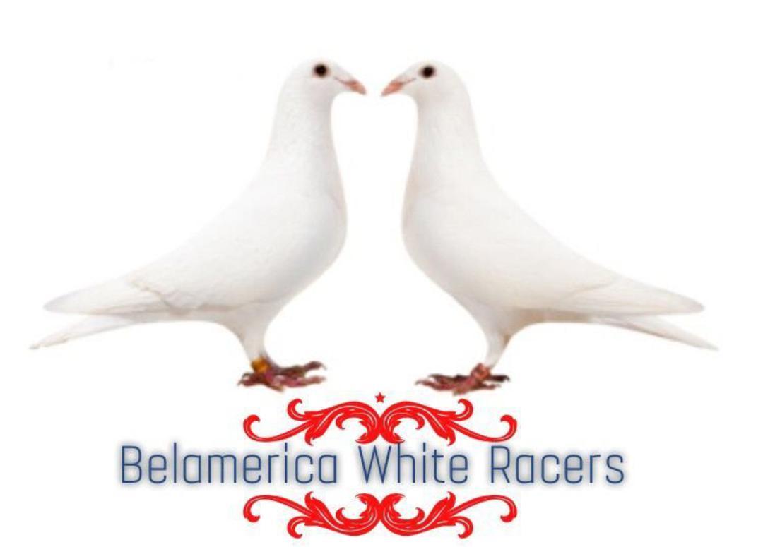 Trenton Racing Homing Pigeons