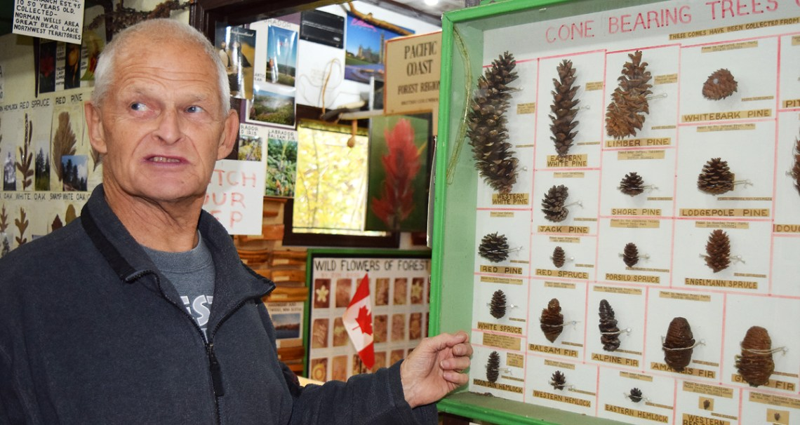 Jim Good in his botanical museum showing off a display of cones from every type of conifer in Canada.