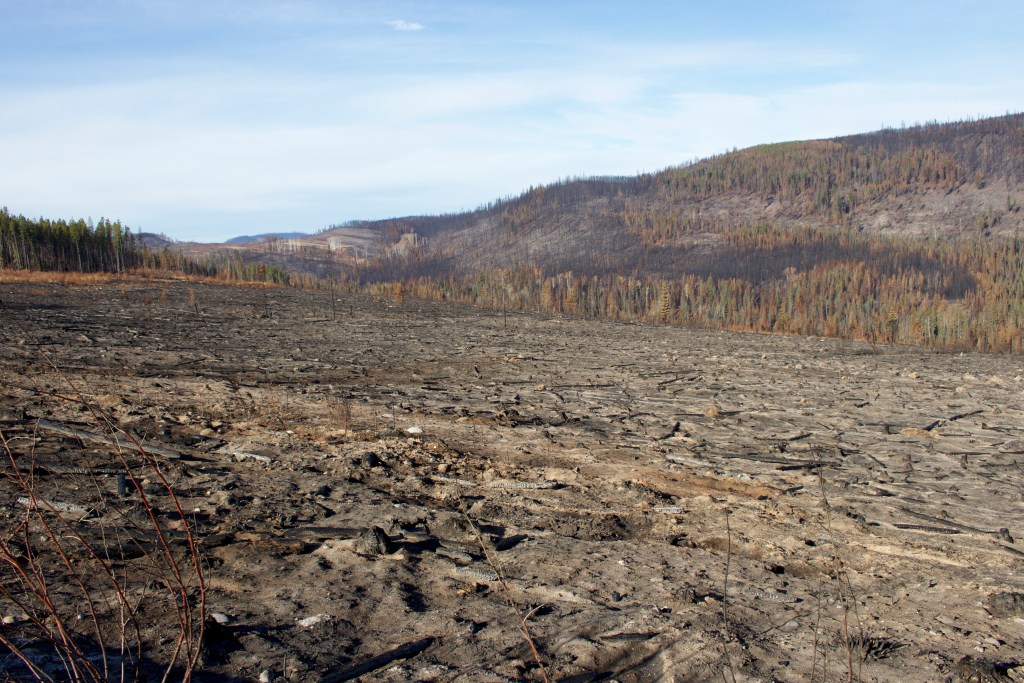 Aftermath of the Shovel Lake fire
