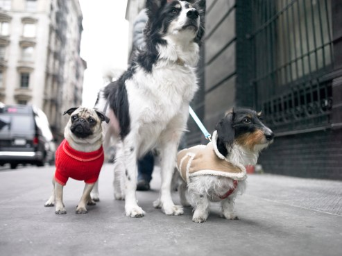 dog walking in the city
