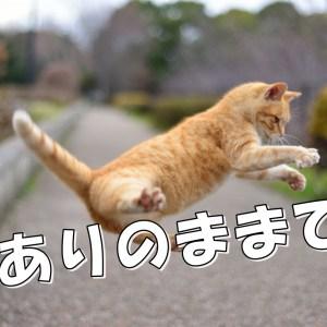 ねこ ジャンプ