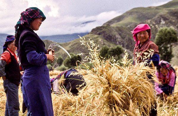 Programa para cooperativas rurales
