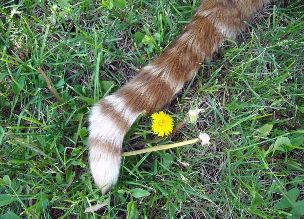 Louie's fine tail.