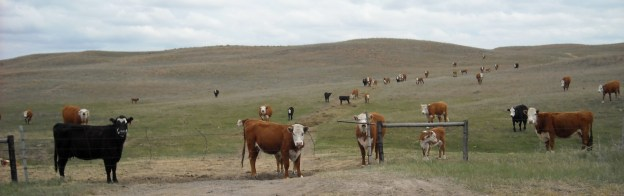 Fresh air in the Nebraska Sandhills... thanks to no cigarettes!