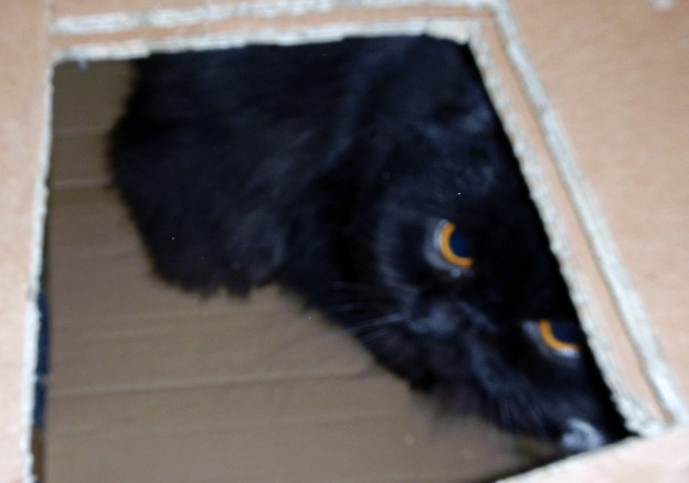Catch as catch can: It's fuzzy focus because Andy and Dougy give you one chance for a shot before they start hiding from the flash. Too bad! This would have been a good one otherwise!