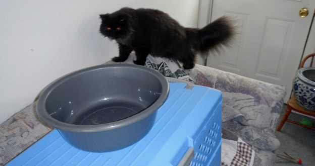 """It """"appears"""" someone is interested in """"The Tub""""."""