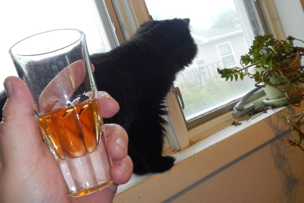 Dougy was obsessing over birds at the feeder across the lane, chirping, pacing, and deciding to leave the scotch to the humans!