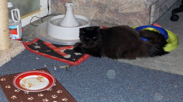 Poor Dougy! Andy ate all of the wet food before Dougy came out of the guest bedroom to join us for the day!