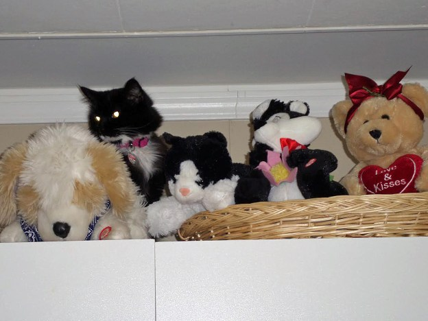 Stuffed toys on top of the armoire....