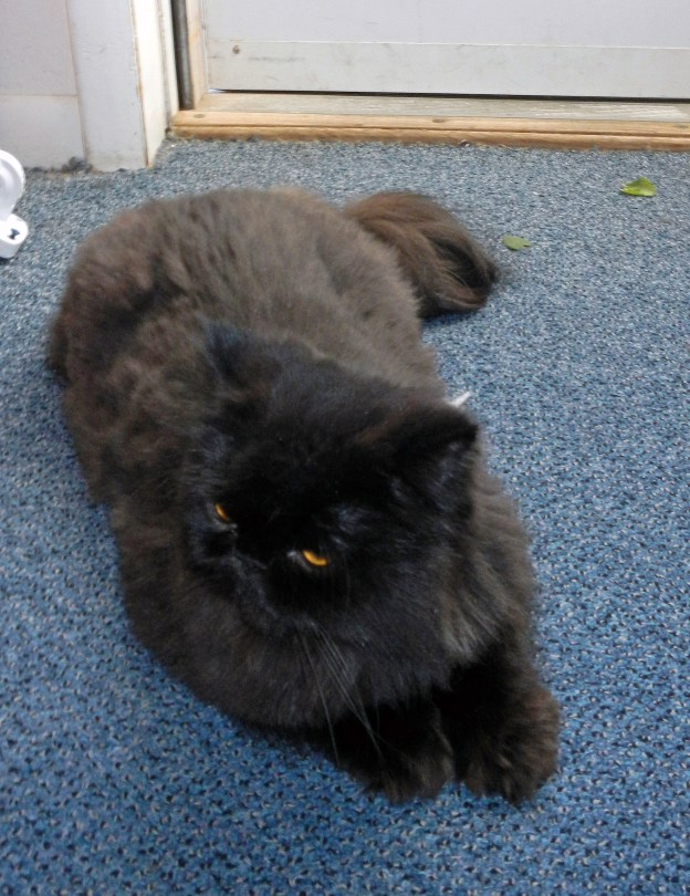 Why, it's fresh catnip leaves that the human tossed by the door! Andy quickly doses up.