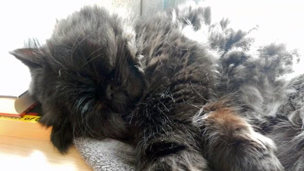 J.S. Bach kitty