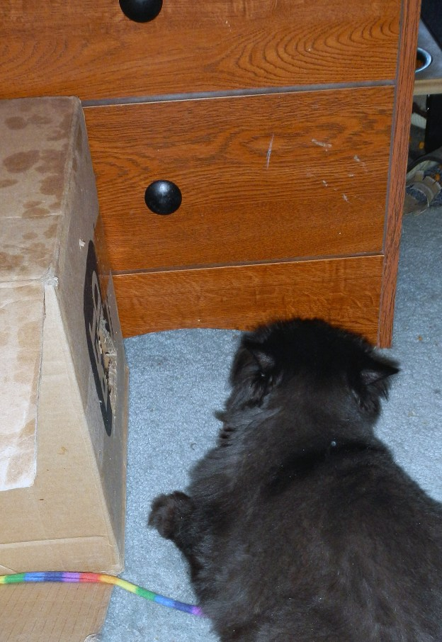 Dougy can't budge Andy from the front, so he waits by the hole on the side. Andy will try to scare him away, but Dougy will prevail!