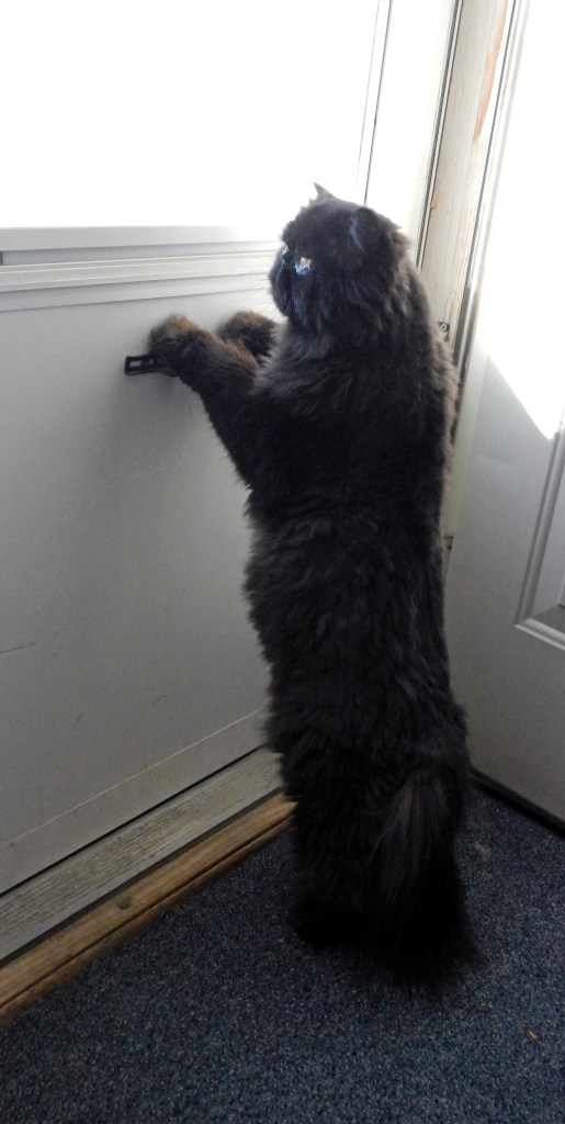 Dougy heard the mail carrier coming...! Will this be the day?!
