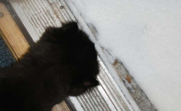 Slowly, with great caution, Andy takes a closer look at the mysterious pawprint!