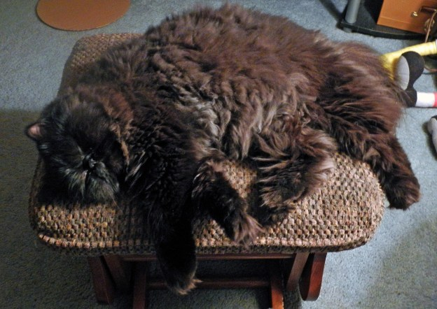 Dougy in a more typical pose on his favorite ottoman....