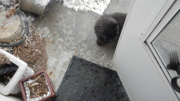 But Dougy came back around the door to explore the other side of the sidewalk.