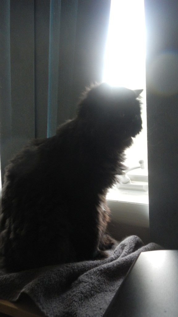Dougy stopped by the back window to birdwatch.