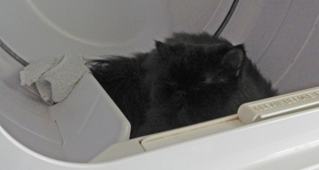 Andy in his dryer nest.