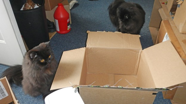 Andy and Dougy can'ty believe their good luck! Two new boxes! All there's left to do is sort out who gets which one or who gets both.