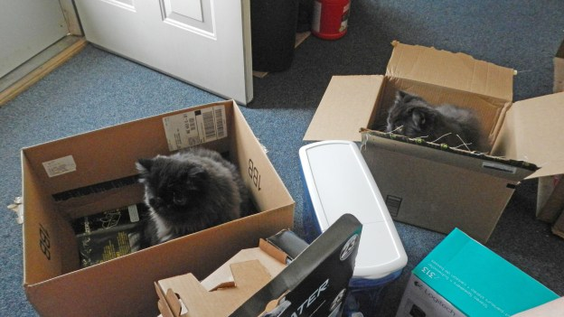 Before this happened, though, Andy had to spend some time alone with the prized boxes, and that was possible because Dougy decided to leave the area