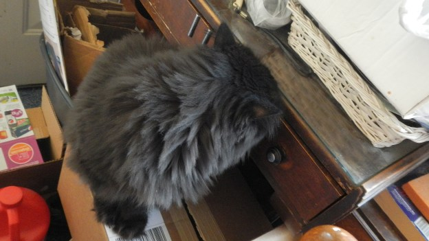 Dougy is certain he can open this drawer. He's seen Andy handle similar challenges.
