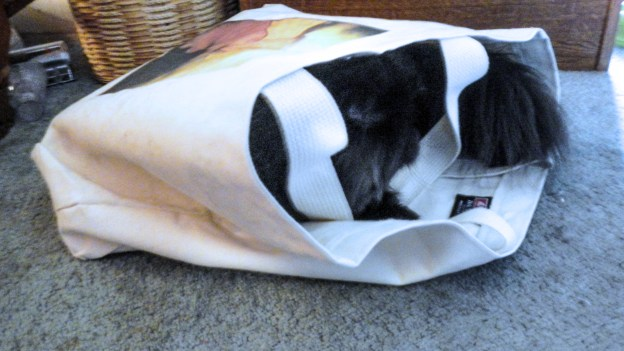 Dougy's new nap place! Sun's up a bit more in this photo, but the bag is just right for a quick nap.